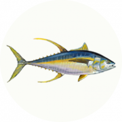 thon-albacore@2x.png